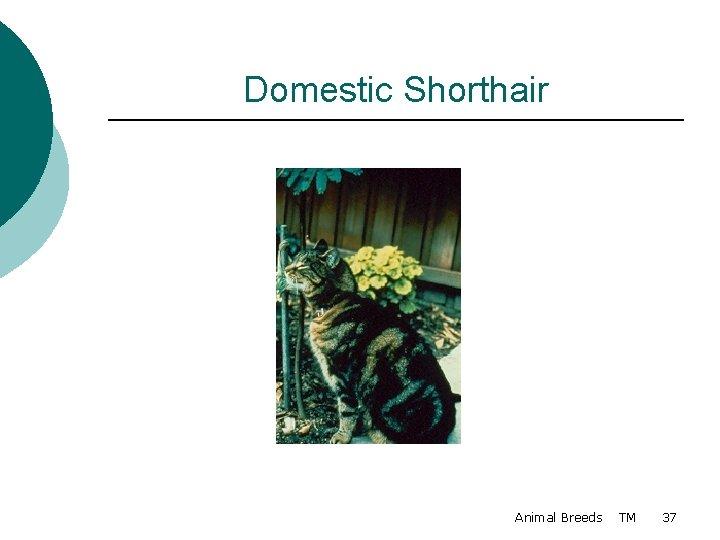Domestic Shorthair Animal Breeds TM 37