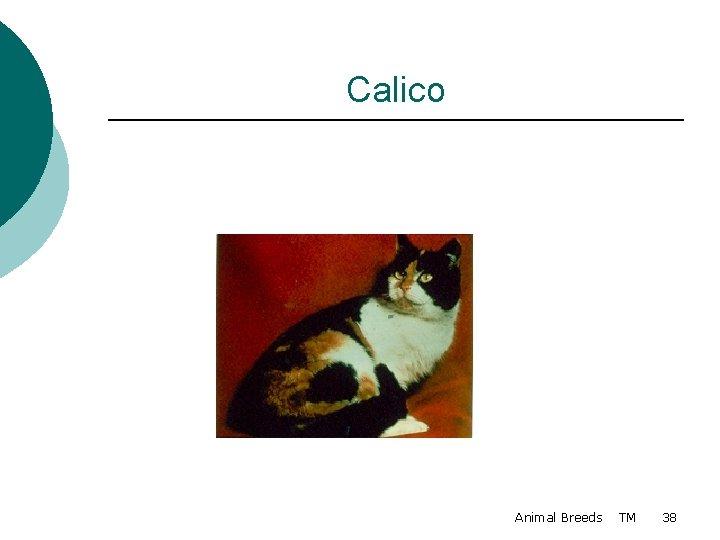 Calico Animal Breeds TM 38