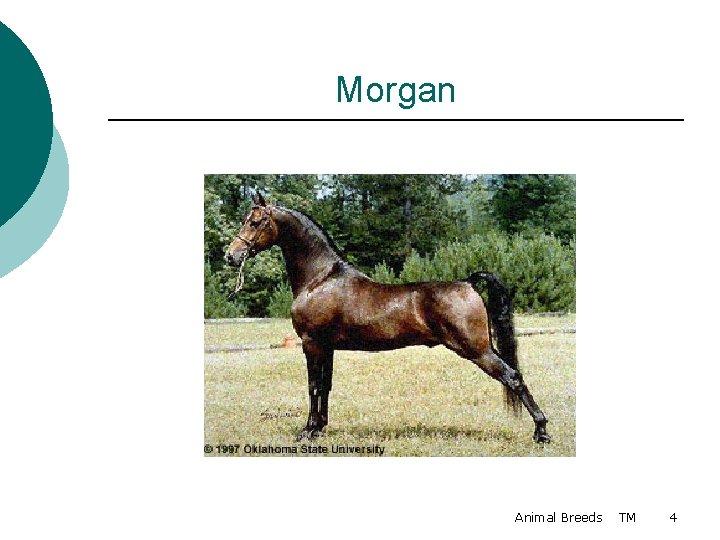 Morgan Animal Breeds TM 4