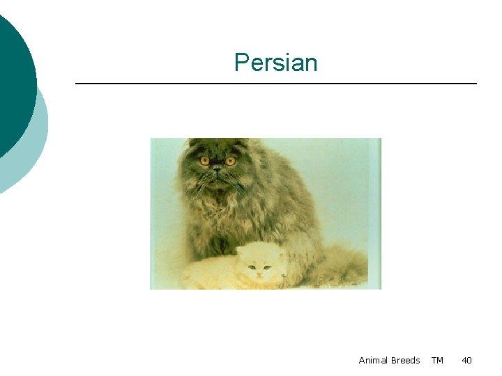 Persian Animal Breeds TM 40