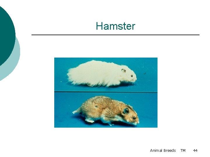Hamster Animal Breeds TM 44
