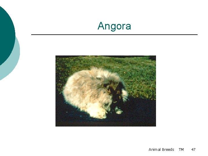 Angora Animal Breeds TM 47