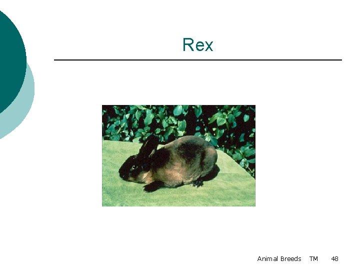 Rex Animal Breeds TM 48