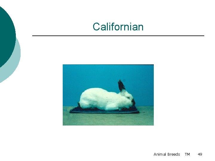 Californian Animal Breeds TM 49