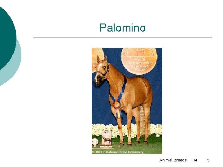 Palomino Animal Breeds TM 5