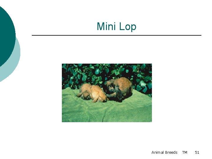 Mini Lop Animal Breeds TM 51