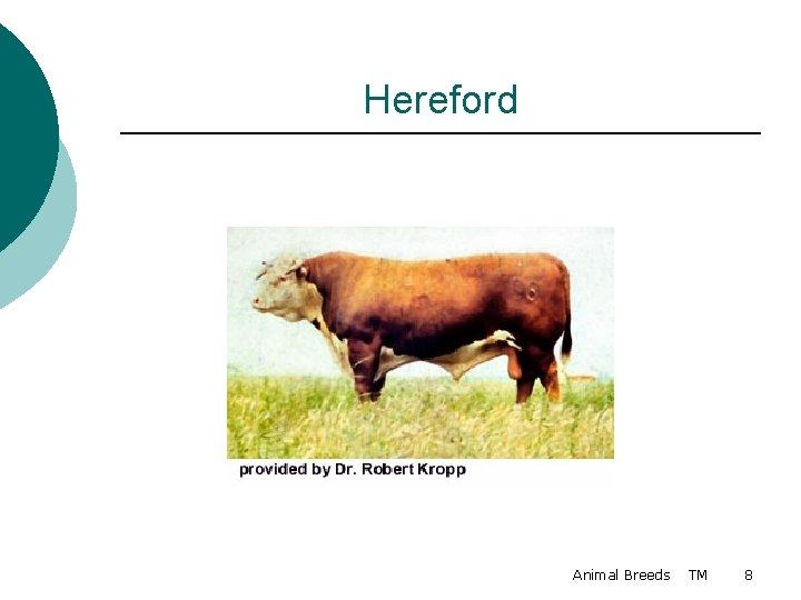 Hereford Animal Breeds TM 8