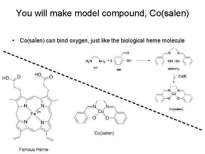 You will make model compound, Co(salen) • Co(salen) can bind oxygen, just like the