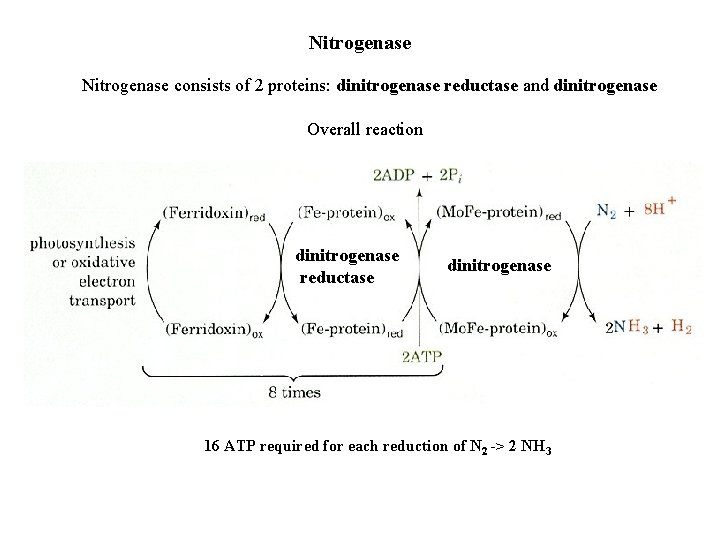 Nitrogenase consists of 2 proteins: dinitrogenase reductase and dinitrogenase Overall reaction dinitrogenase reductase dinitrogenase