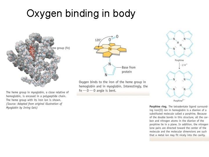 Oxygen binding in body