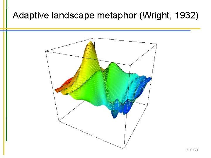 Adaptive landscape metaphor (Wright, 1932) 10 / 24