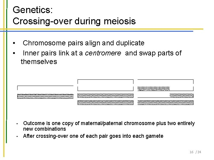 Genetics: Crossing-over during meiosis • • Chromosome pairs align and duplicate Inner pairs link
