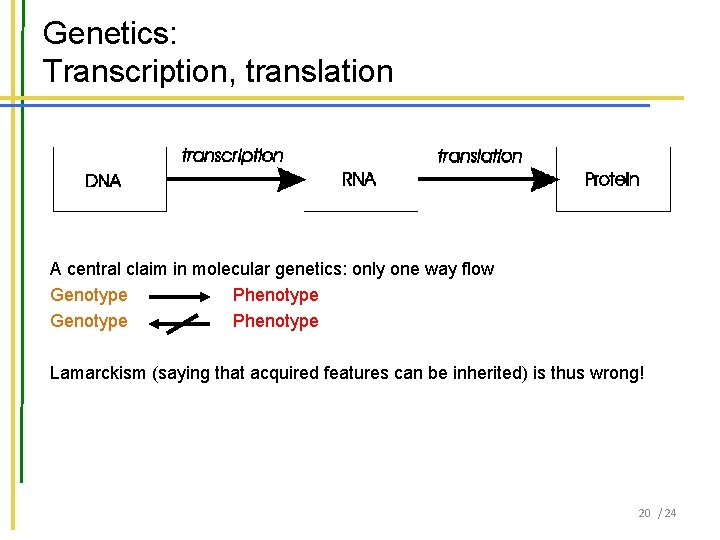 Genetics: Transcription, translation A central claim in molecular genetics: only one way flow Genotype