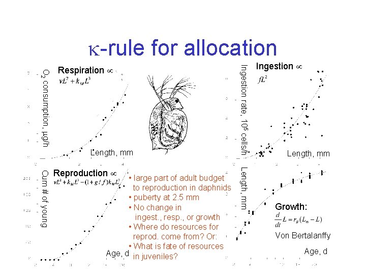 -rule for allocation Length, mm • large part of adult budget to reproduction