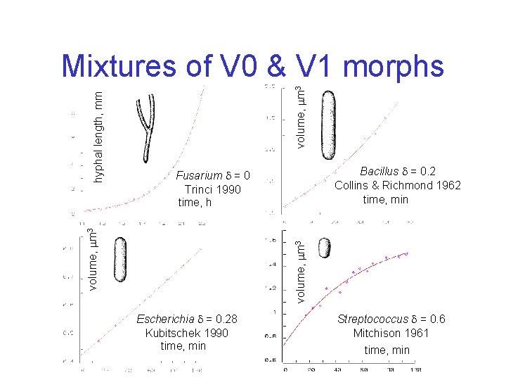 volume, m 3 Bacillus = 0. 2 Collins & Richmond 1962 time, min Fusarium