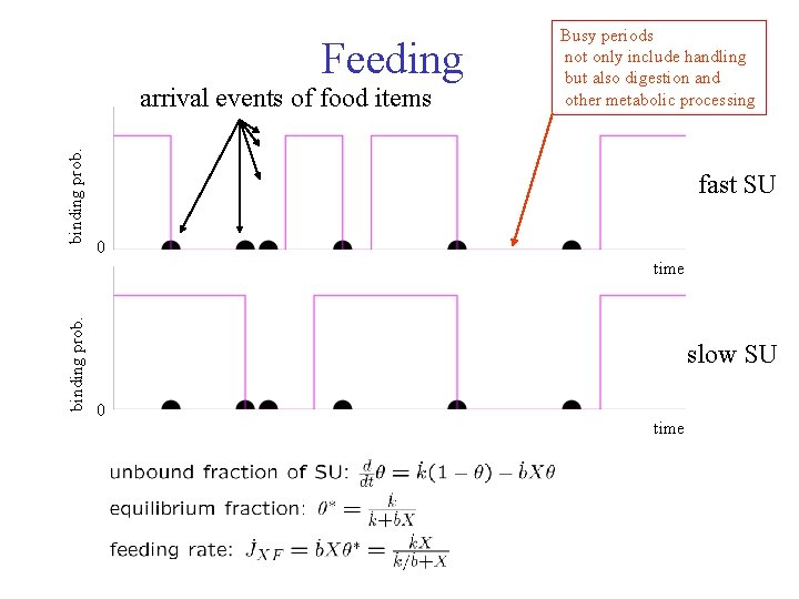 Feeding binding prob. arrival events of food items Busy periods not only include handling