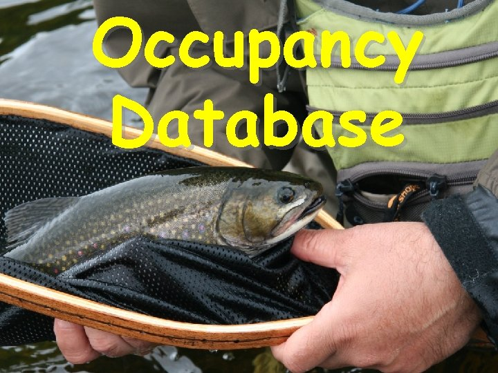 Occupancy Database