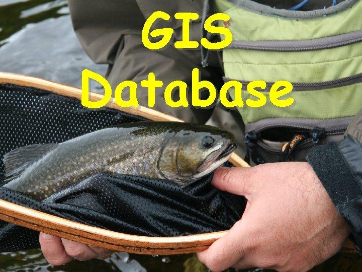 GIS Database