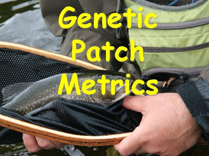 Genetic Patch Metrics