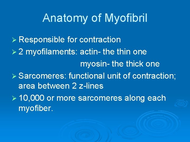 Anatomy of Myofibril Ø Responsible for contraction Ø 2 myofilaments: actin- the thin one