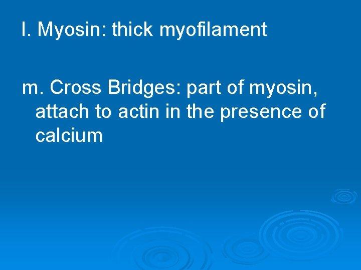 l. Myosin: thick myofilament m. Cross Bridges: part of myosin, attach to actin in