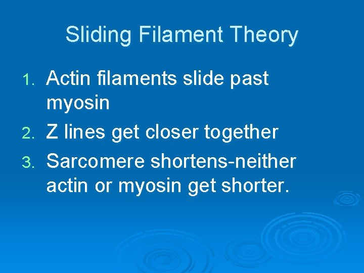 Sliding Filament Theory Actin filaments slide past myosin 2. Z lines get closer together