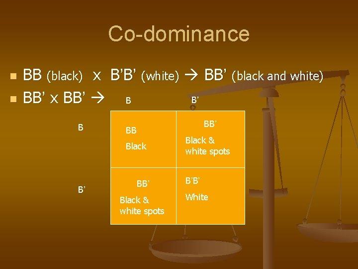 Co-dominance n n BB (black) x B'B' (white) BB' (black and white) BB' x