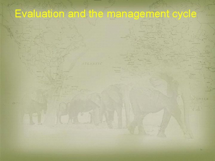 Evaluation and the management cycle