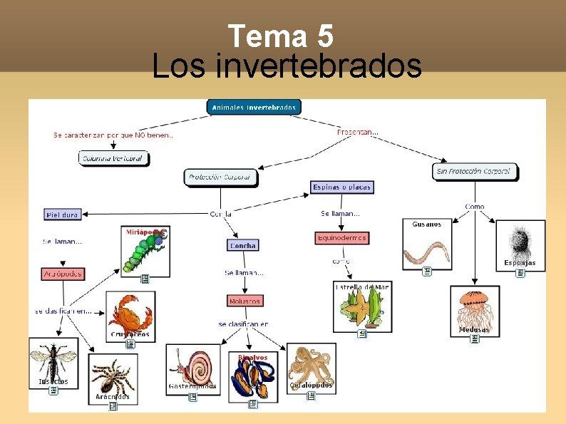 Tema 5 Los invertebrados