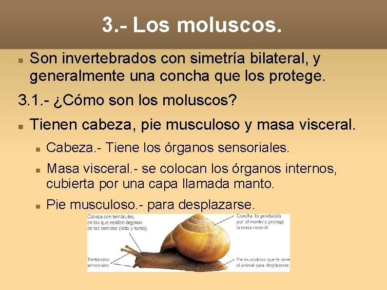 3. - Los moluscos. Son invertebrados con simetría bilateral, y generalmente una concha que