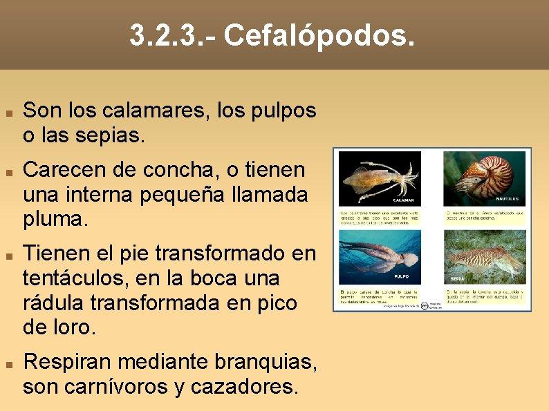3. 2. 3. - Cefalópodos. Son los calamares, los pulpos o las sepias. Carecen