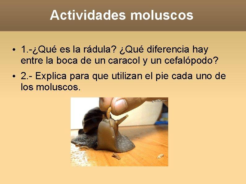 Actividades moluscos • 1. -¿Qué es la rádula? ¿Qué diferencia hay entre la boca