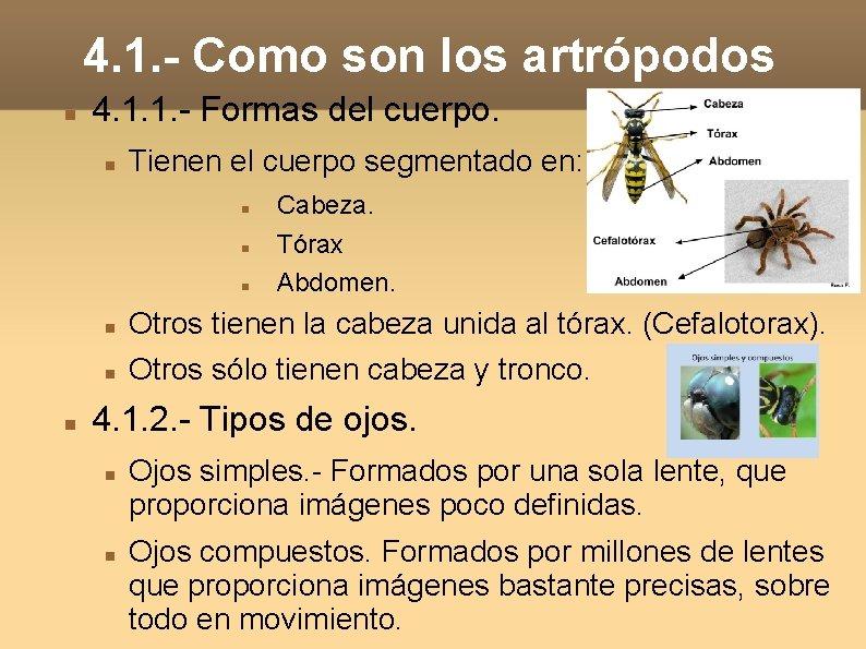 4. 1. - Como son los artrópodos 4. 1. 1. - Formas del cuerpo.