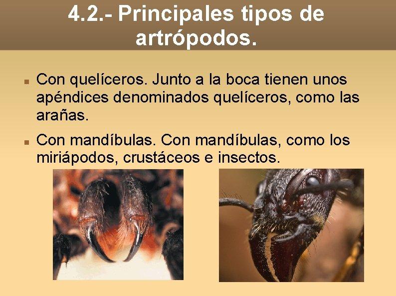 4. 2. - Principales tipos de artrópodos. Con quelíceros. Junto a la boca tienen