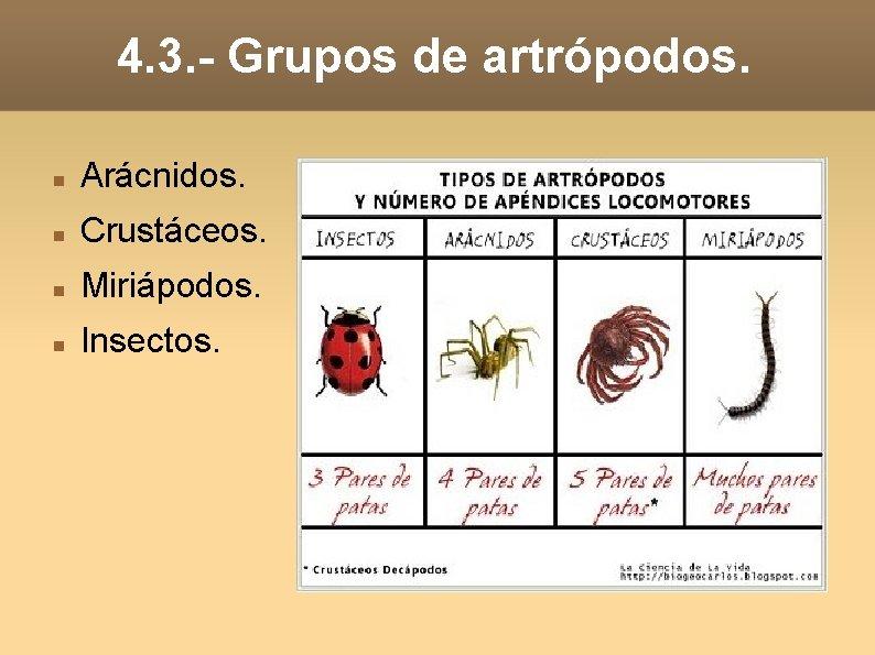 4. 3. - Grupos de artrópodos. Arácnidos. Crustáceos. Miriápodos. Insectos.