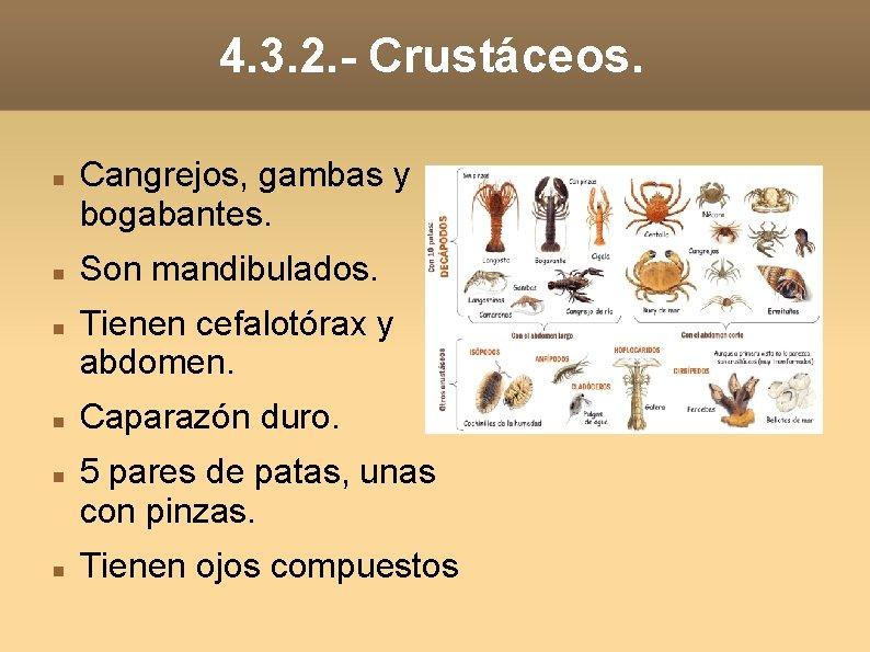 4. 3. 2. - Crustáceos. Cangrejos, gambas y bogabantes. Son mandibulados. Tienen cefalotórax y