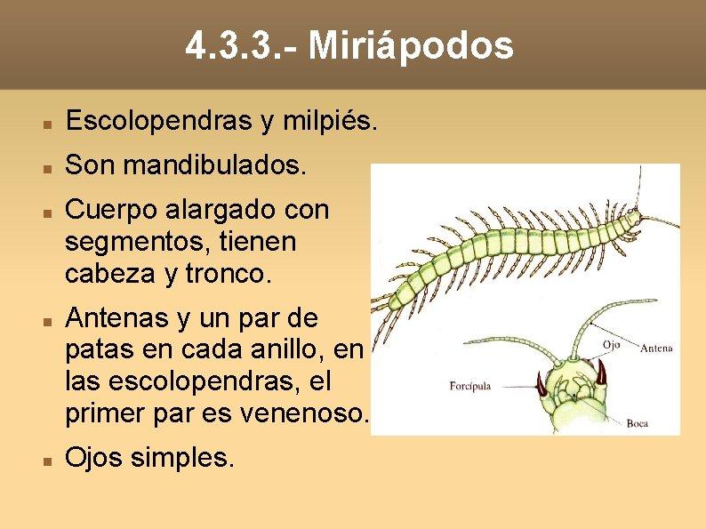 4. 3. 3. - Miriápodos Escolopendras y milpiés. Son mandibulados. Cuerpo alargado con segmentos,