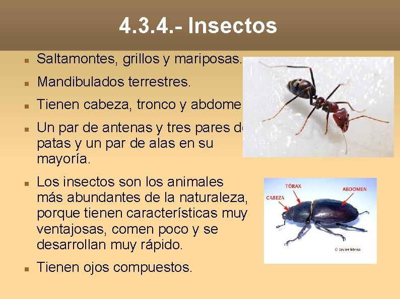 4. 3. 4. - Insectos Saltamontes, grillos y mariposas. Mandibulados terrestres. Tienen cabeza, tronco