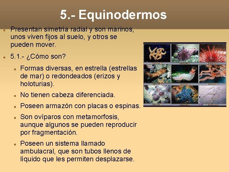 5. - Equinodermos Presentan simetría radial y son marinos, unos viven fijos al suelo,