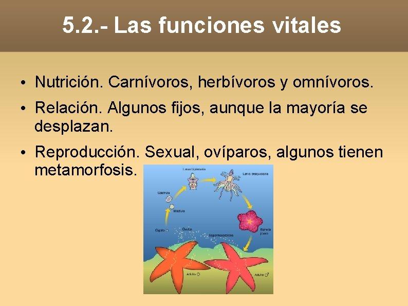 5. 2. - Las funciones vitales • Nutrición. Carnívoros, herbívoros y omnívoros. • Relación.
