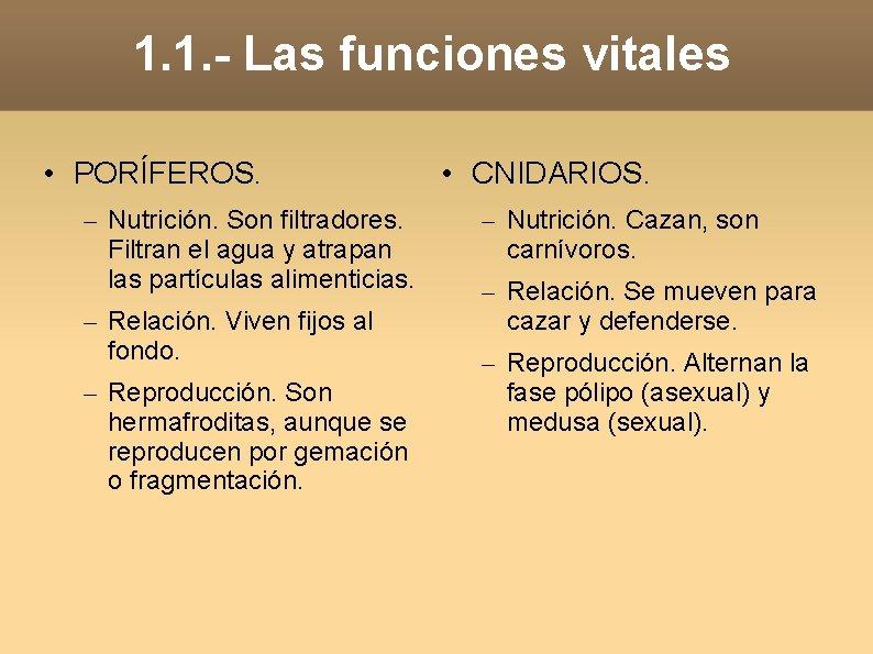 1. 1. - Las funciones vitales • PORÍFEROS. – Nutrición. Son filtradores. Filtran el
