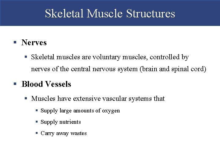Skeletal Muscle Structures § Nerves § Skeletal muscles are voluntary muscles, controlled by nerves