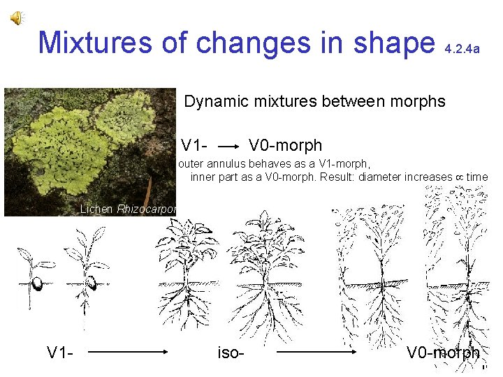 Mixtures of changes in shape 4. 2. 4 a Dynamic mixtures between morphs V