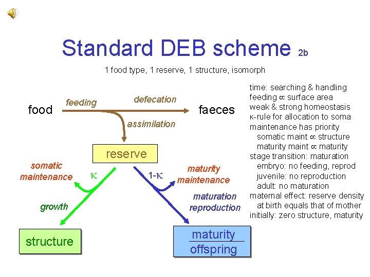 Standard DEB scheme 2 b 1 food type, 1 reserve, 1 structure, isomorph food