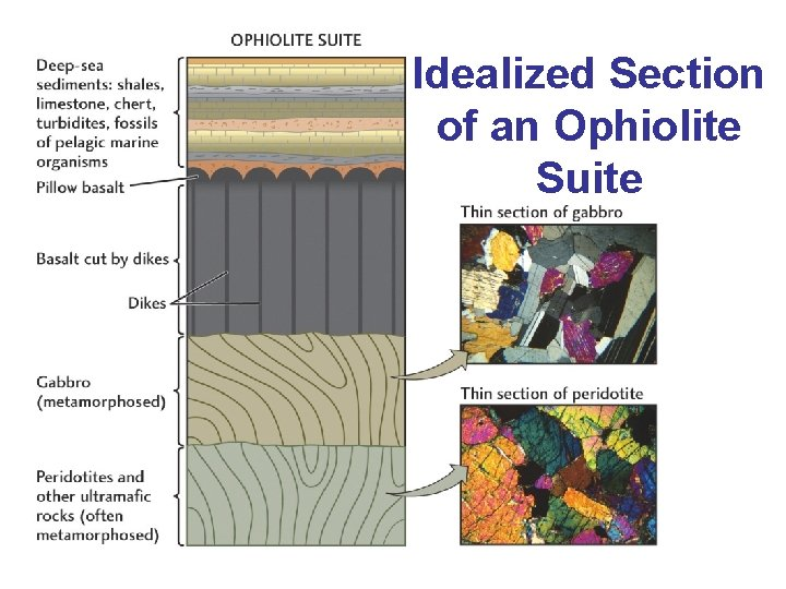 Idealized Section of an Ophiolite Suite ?