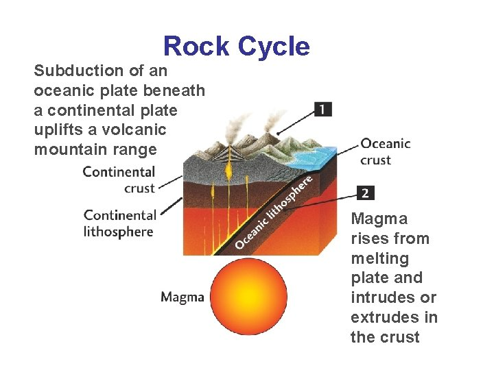 Rock Cycle Subduction of an oceanic plate beneath a continental plate uplifts a volcanic