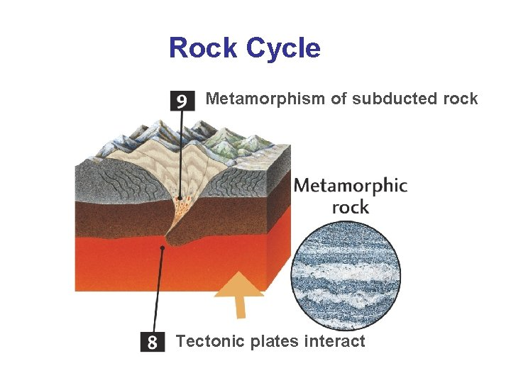 Rock Cycle Metamorphism of subducted rock Tectonic plates interact