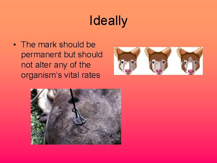 Ideally • The mark should be permanent but should not alter any of the