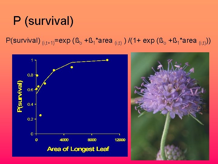 P (survival) P(survival) (i, t+1)=exp (ßo +ß 1*area (i, t) ) /(1+ exp (ßo