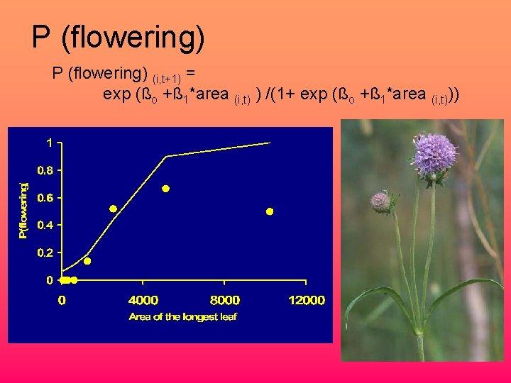 P (flowering) (i, t+1) = exp (ßo +ß 1*area (i, t) ) /(1+ exp